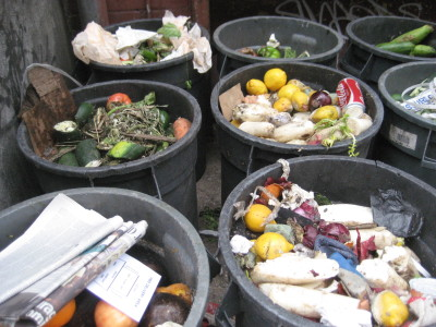 the food waste view