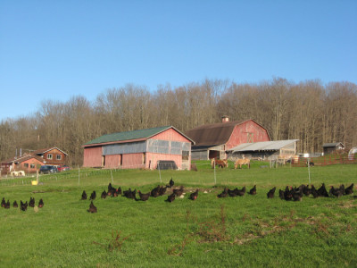 King Bird Farm