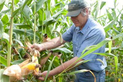 Organic Farmer Klaas Martens. Photo: Jen Munkvold