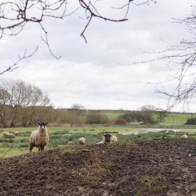 Muddy Marshland