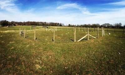 Bess' Training Ring practically complete!