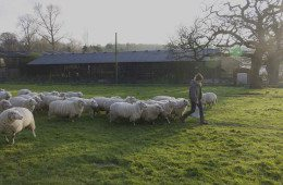 Plaw Hatch Farm Diaries