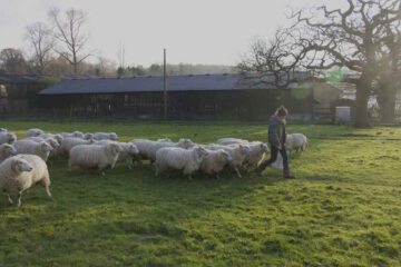 Plaw Hatch Farm Diaries