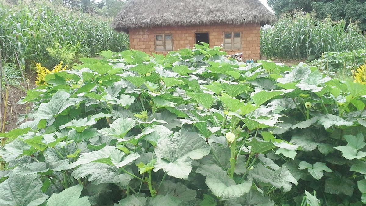 a-typical-organic-home-vegetable-garden-of-nfor-a-progressive-farmer
