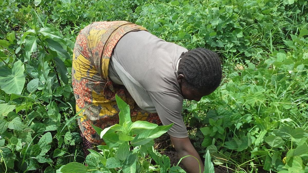 a-woman-farmer-weeding-at-her-organic-home-garden