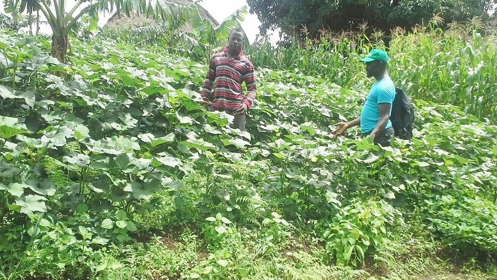 kari-jackson-visiting-nfor-organic-home-garden-intercropped-with-okra-maize-banana-tomato-carrots-pumpkin-onion-water-melon