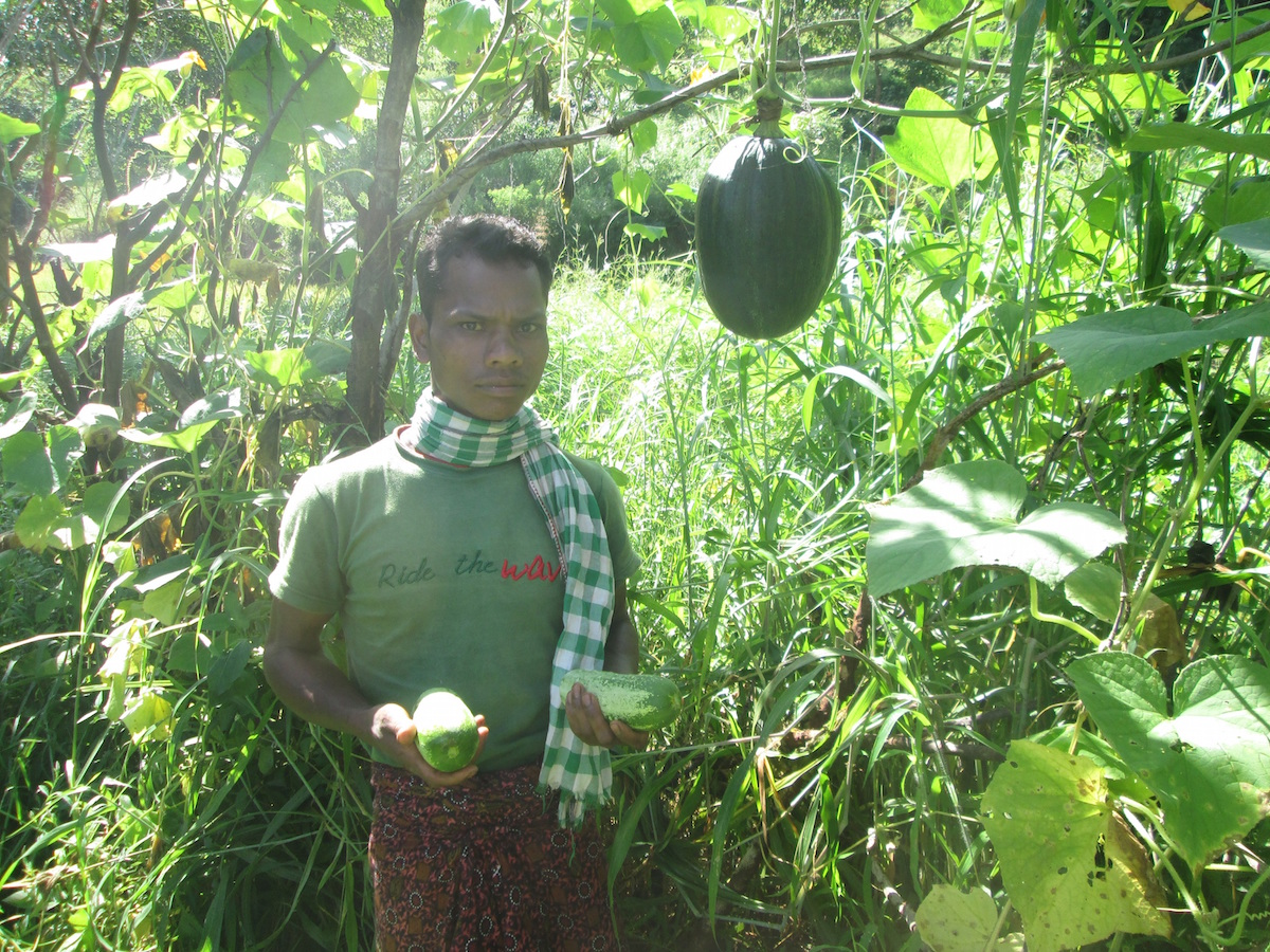 Ramnath Majhi is delighted to show cucumber and pumpkin in his farmland