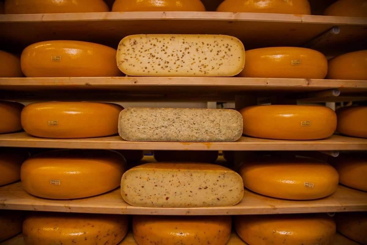 Cornish Gouda Cheese