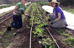 No-till planting, straight-in, no break. Credit: Singing Frogs Farm