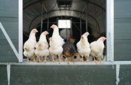 Plaw Hatch Farm