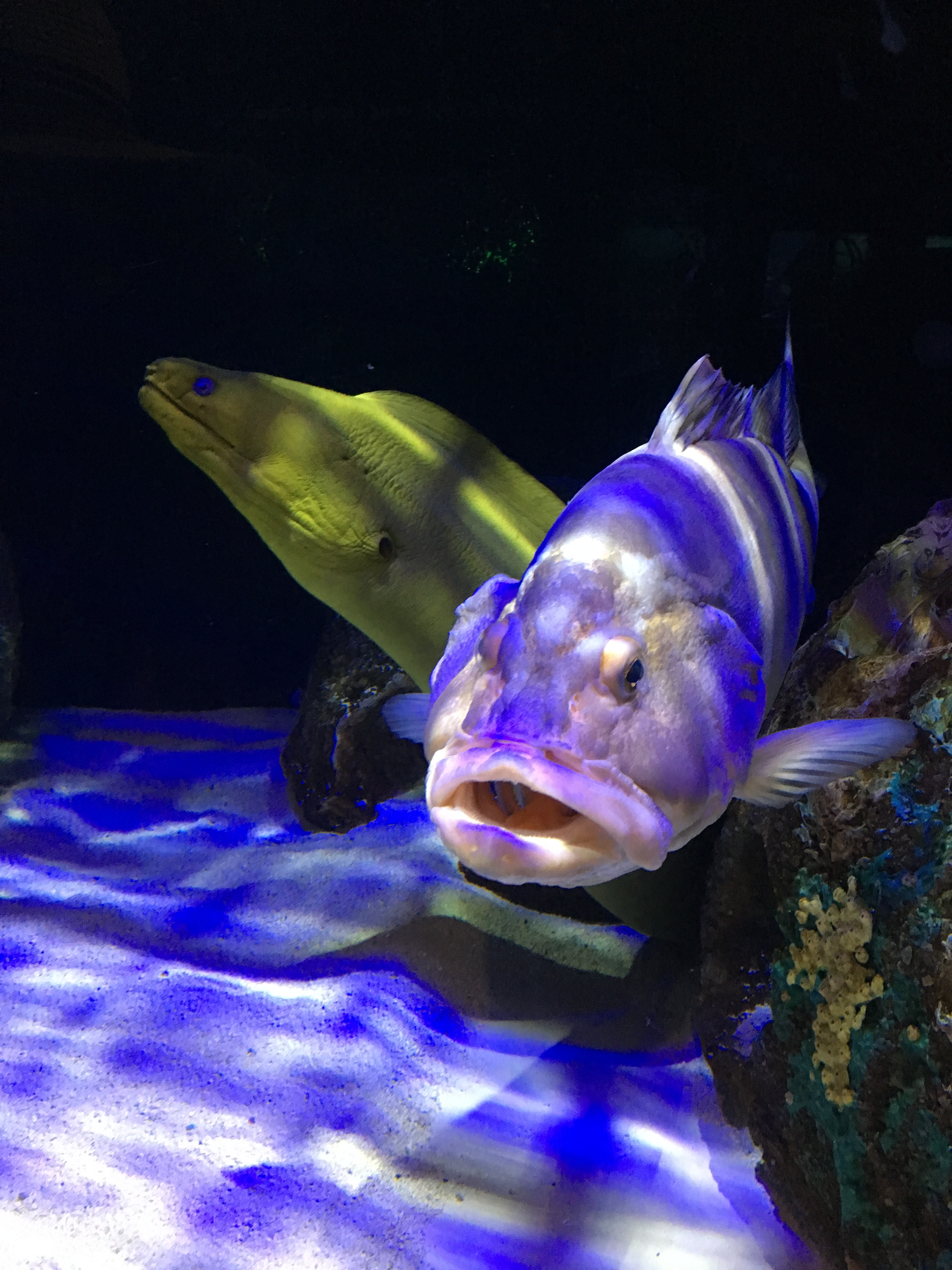 Mote Aquarium Review on Livin' Life with Style