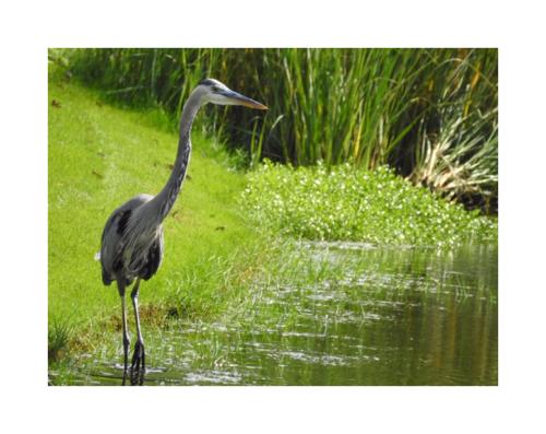 Kiawah Lagoons