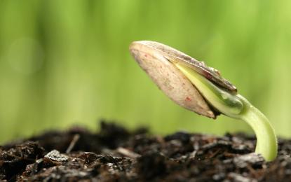 Modifican semillas para crear árboles resistentes al cambio climático