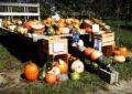 Pumpkin Patches, Hayrides, and Corn Mazes in West Michigan