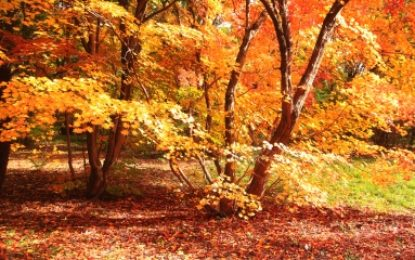 Fall Color Tours in West Michigan