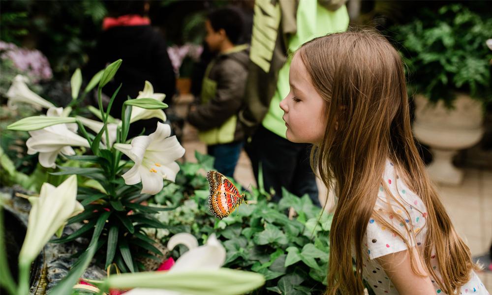 La 26a Exposición Anual de Mariposas de Meijer Gardens Explora Una Era de Descubrimiento y Destaca la Historia del Caso Wardian