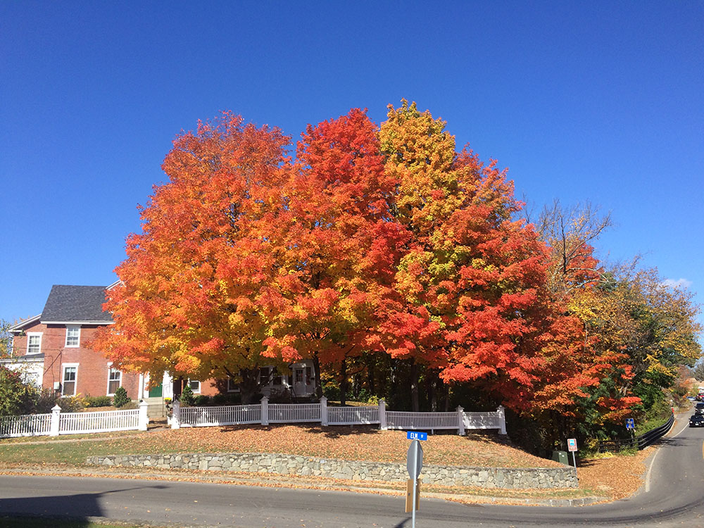 fallcolors_newmarket