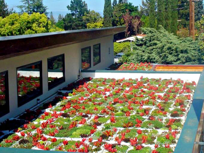 Red flowers planted on a flat roof