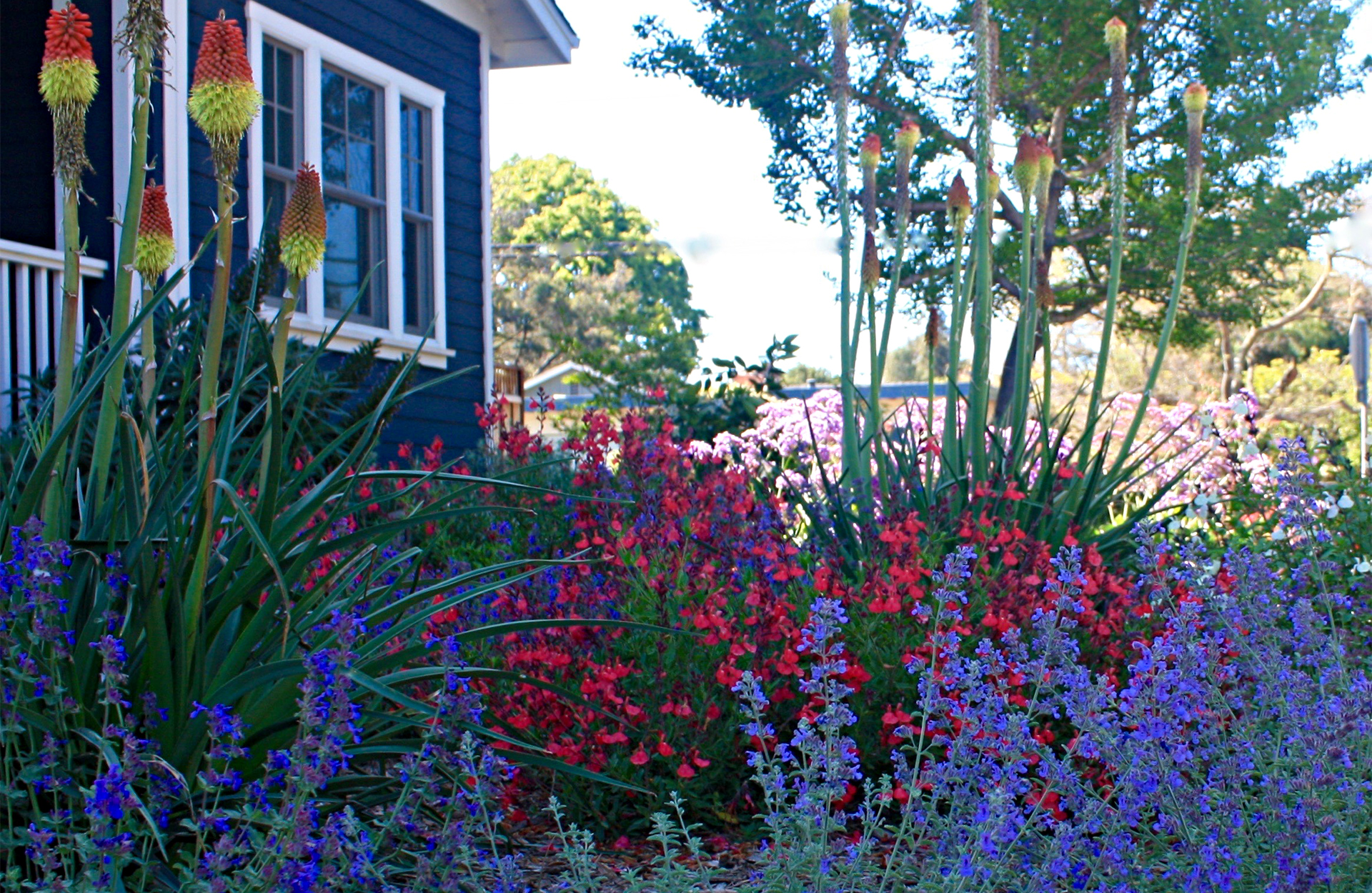 Colorful plants in a front yard
