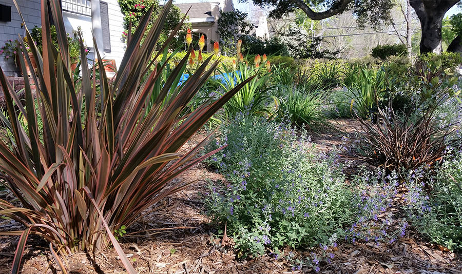 A close up view of some of the plants used to renovate this front yard