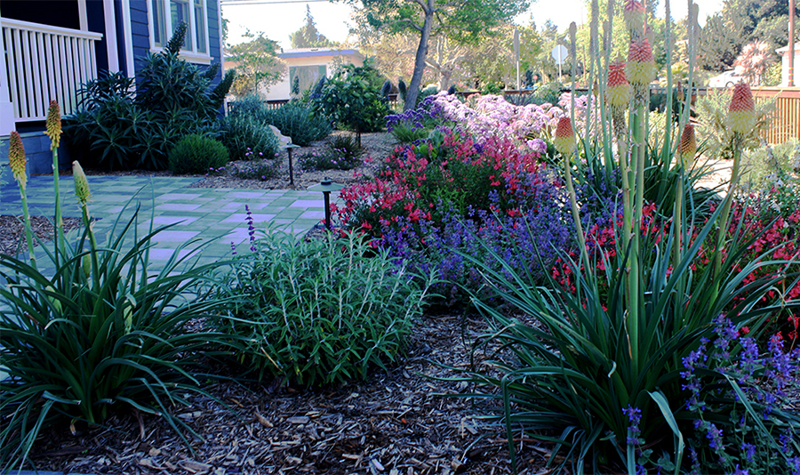 Flowering plants frame this yard and patio