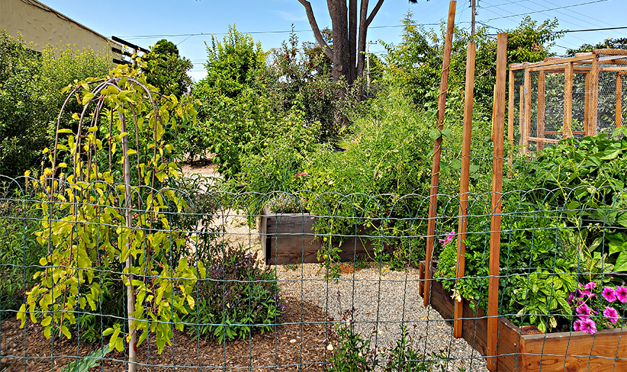 Demo Garden with fruit trees, ornamental plants in the ground, and vegetables, herbs, and flowers in rectangular wooden beds.