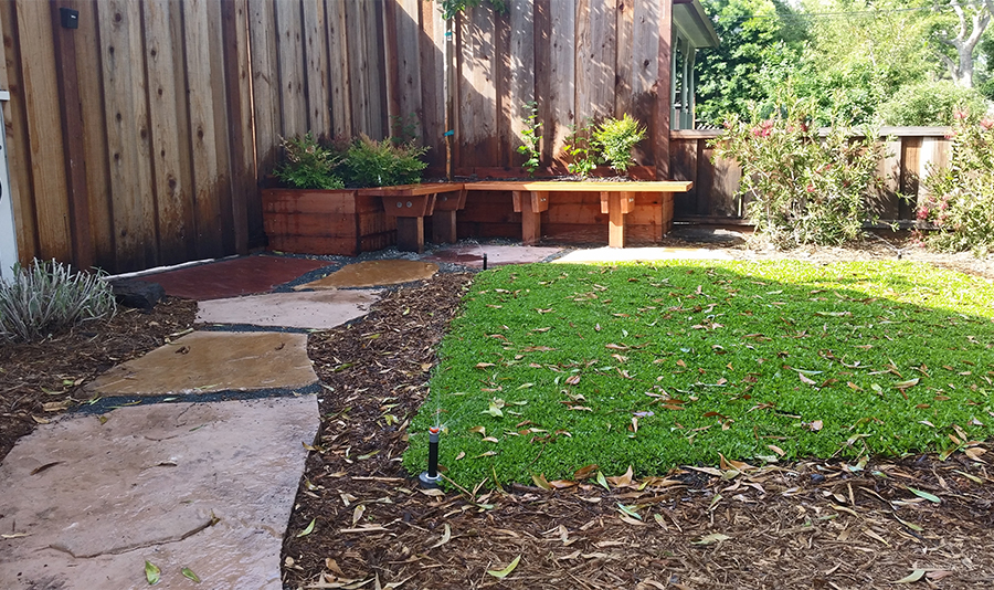 Kurapia ground cover in backyard. Also shown are L-shaped wooden containers with plants and an attached wooden bench as well as a pinkish stone pathway