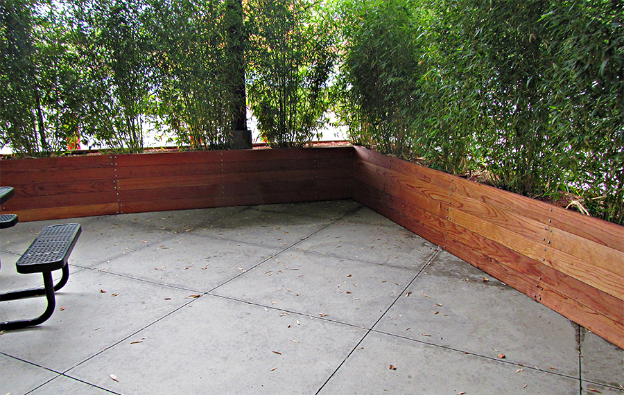 Tall bamboo planted in long wooden containers along patio borders