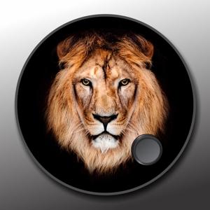 Lion kick head 300x300