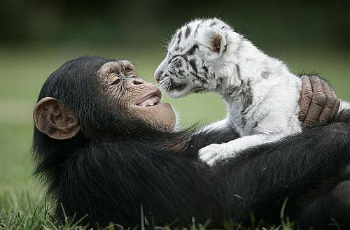 Animals with compassion