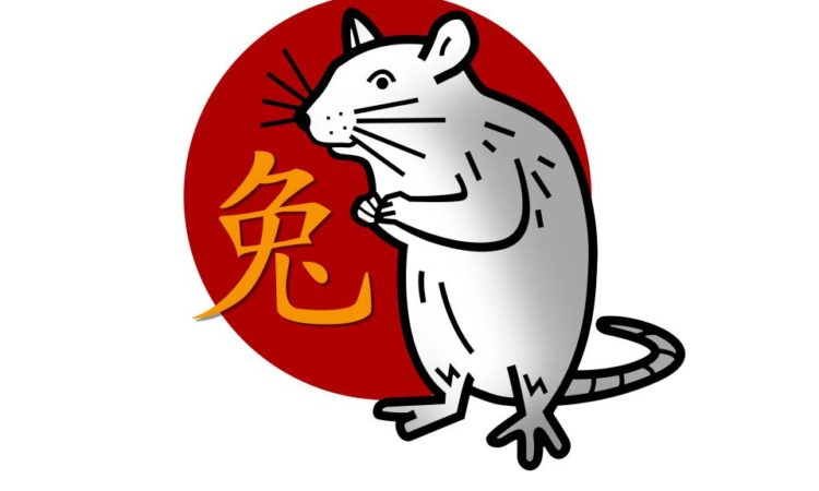 Chinese Rat Year