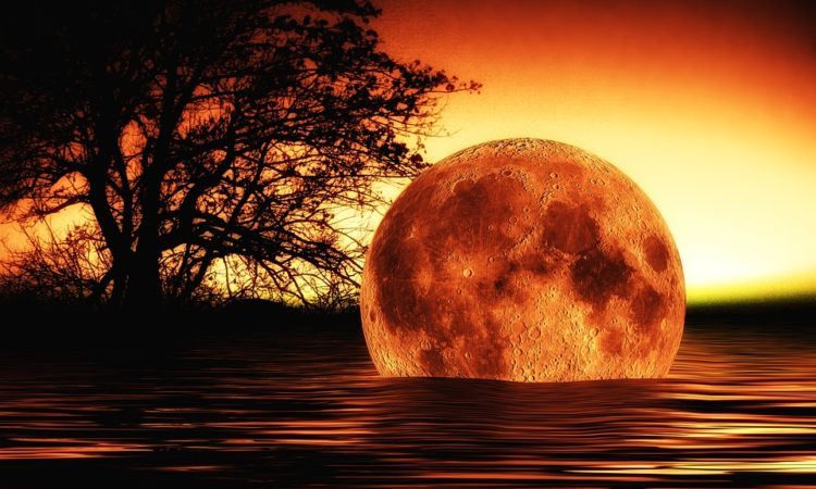 Serendipity Moon