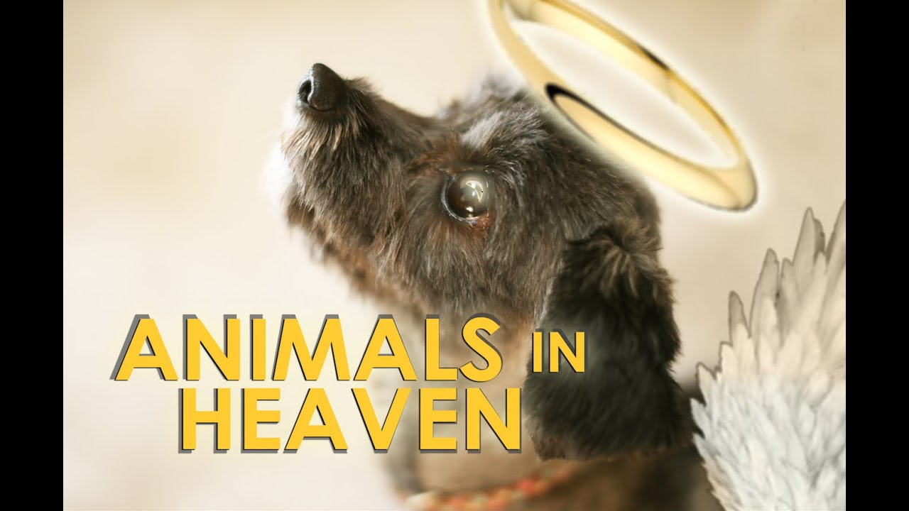 Do animals go to heaven?