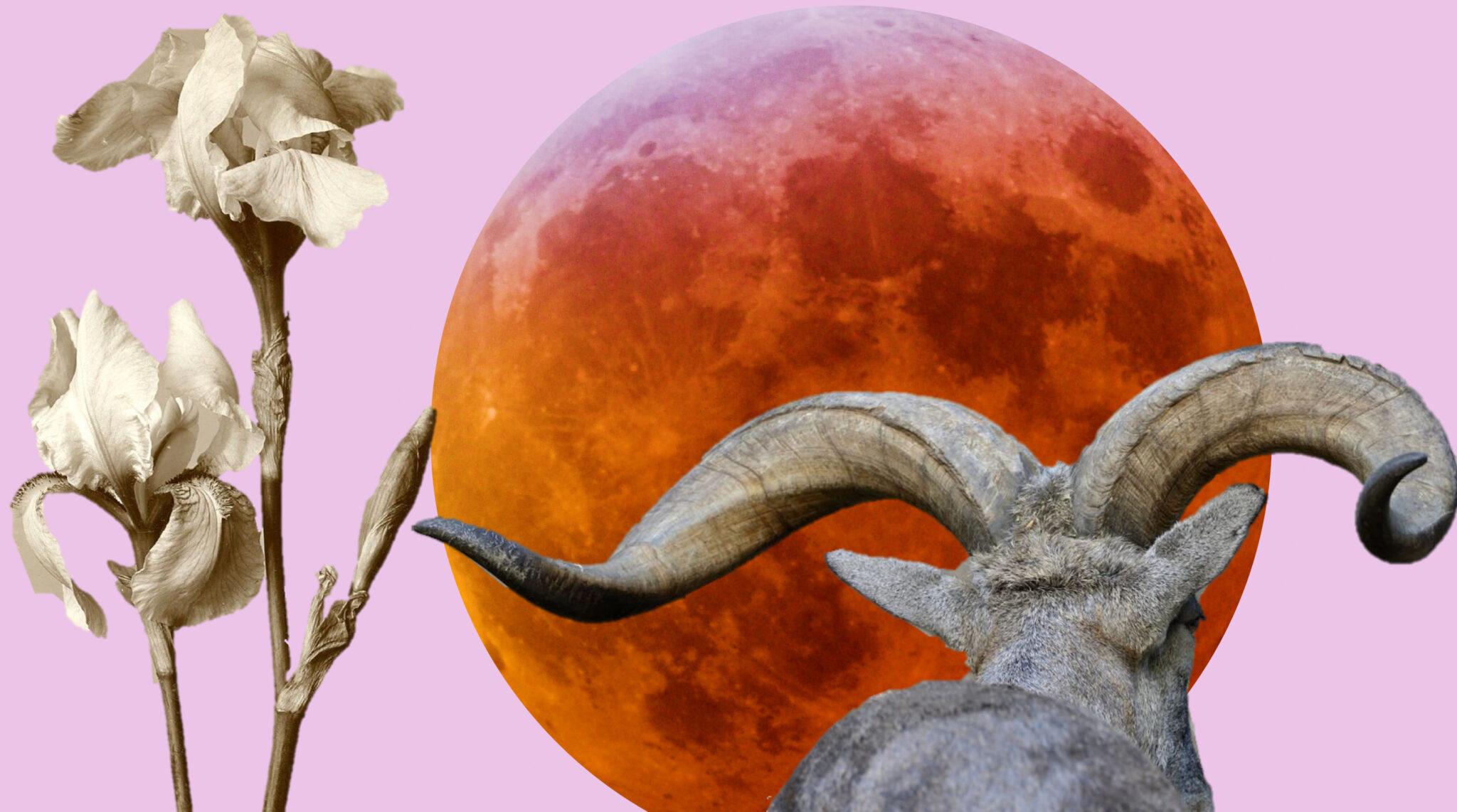 July 5 2020 - Full Moon