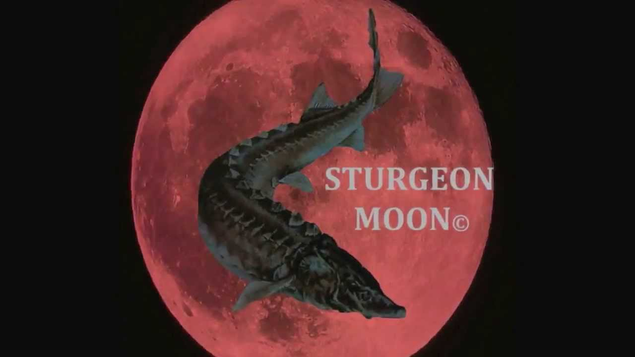 August 3 2020 - Full Sturgeon Moon