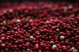 cranberries up close ingredients callout