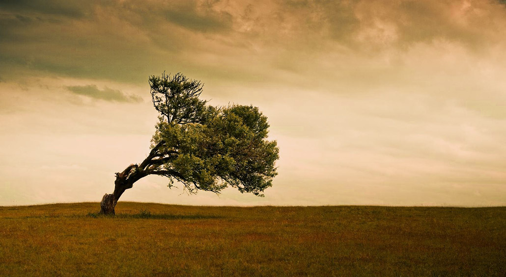 This image of a lonely single tree blowing or growing sideways is used as the header image for the Flexibility and Range of Motion article on TheBodyIsMind