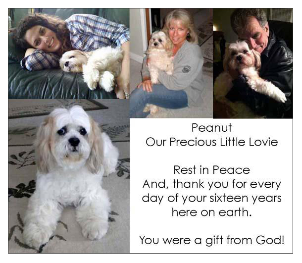 Our pet memorial to Peanut