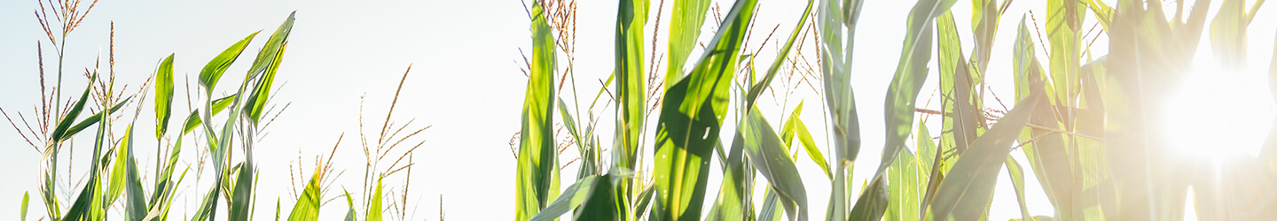 Agribusiness_banner