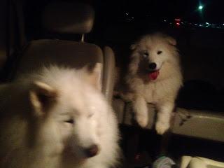 Husky Hitchhikers