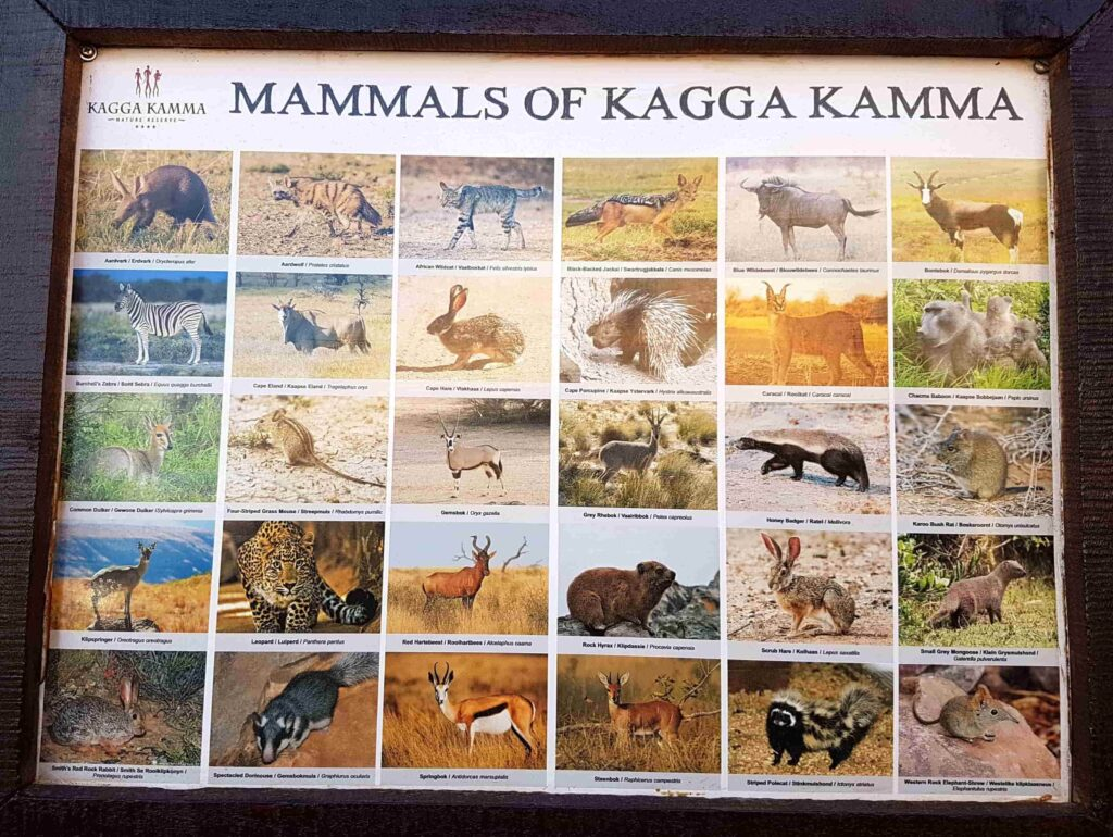 quadro com mamíferos kagga kamma