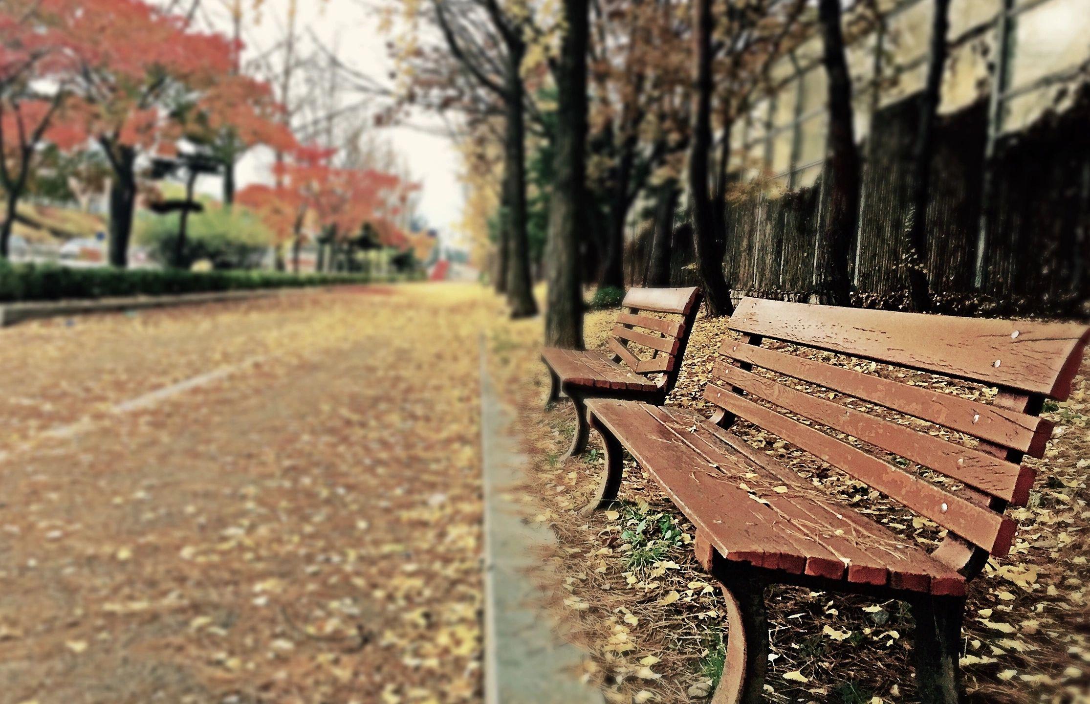 Praça com banco vazio e folhas de outono