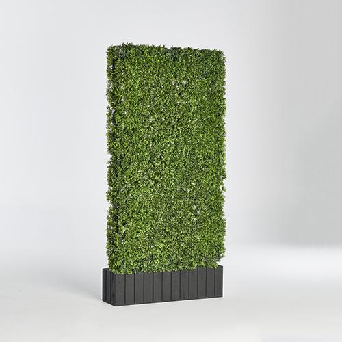 tall hedge