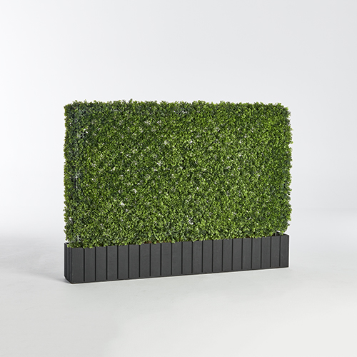 wide hedge