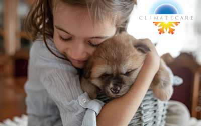 Dandy Without Dander:  Let Your Pets Join Our Home Care Club!