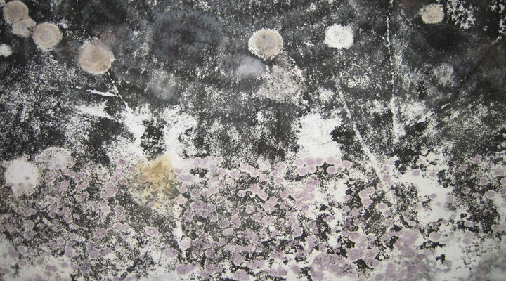 How Mold Affects Your Health in CT