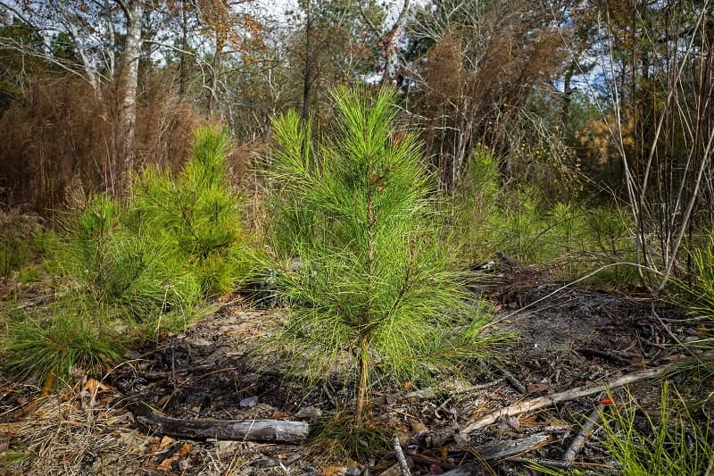 Forest maintenance-cm
