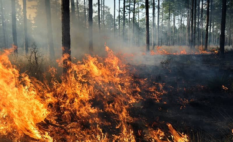 The middle of a forest fire -cm