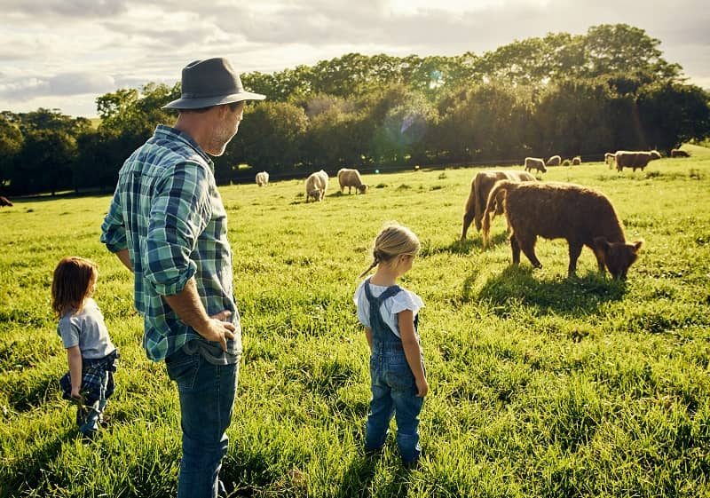They love watching all the animals graze-cm (2)