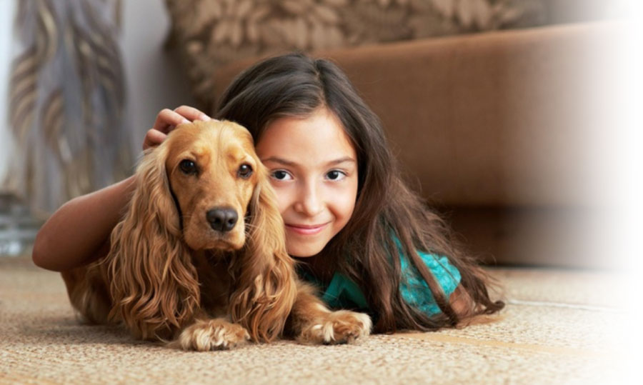 Pet Stain and Oder Removal in San Mateo